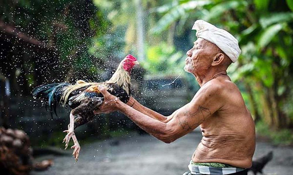 Om gà bằng bài thuốc gia truyền
